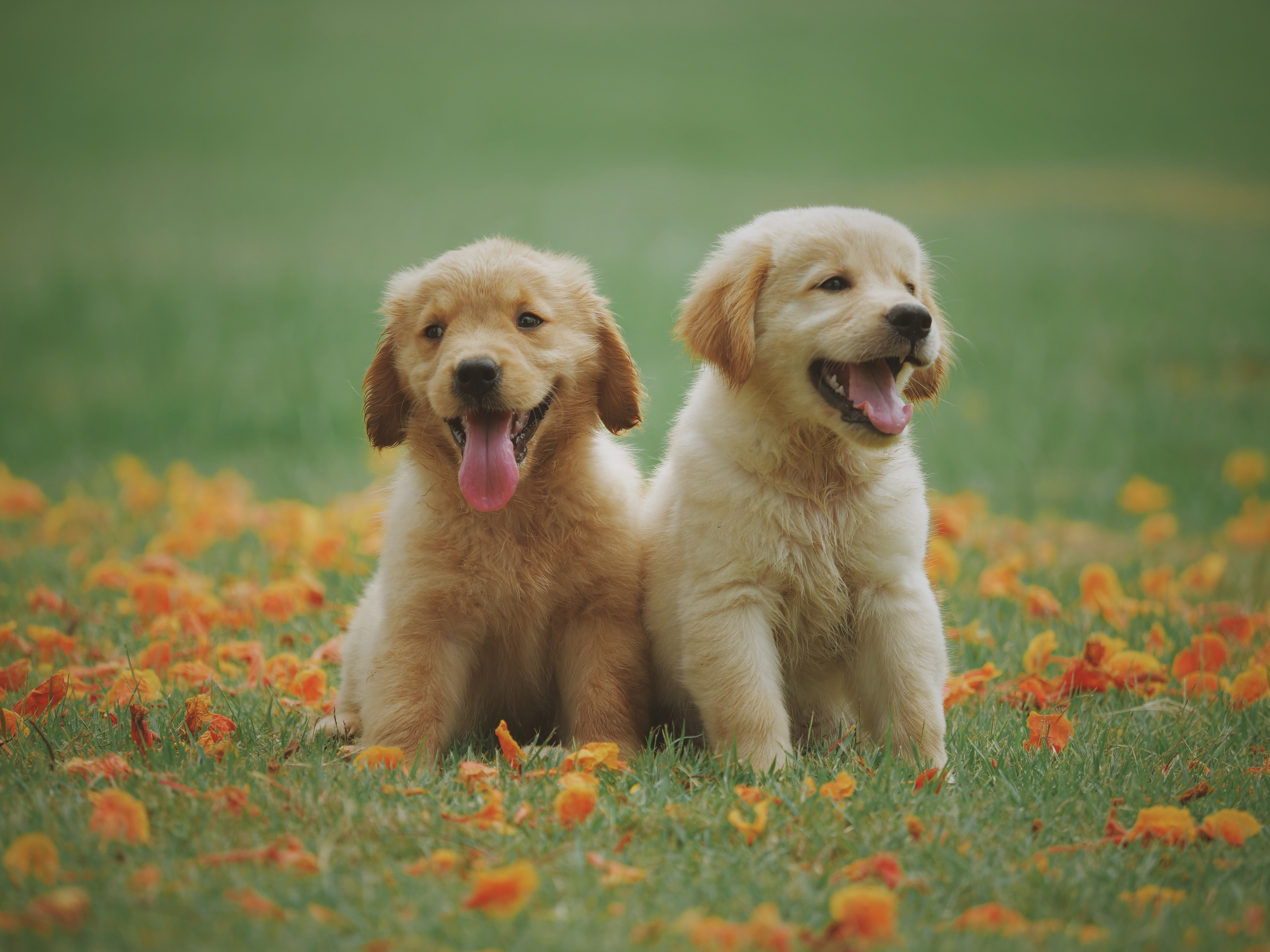 Dog Care Assistant Deputy Dog Day Care, Swansea