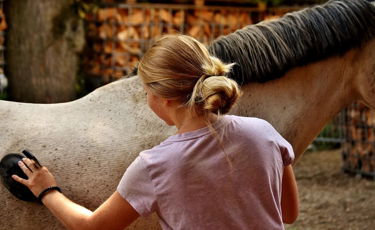 Horse groom job