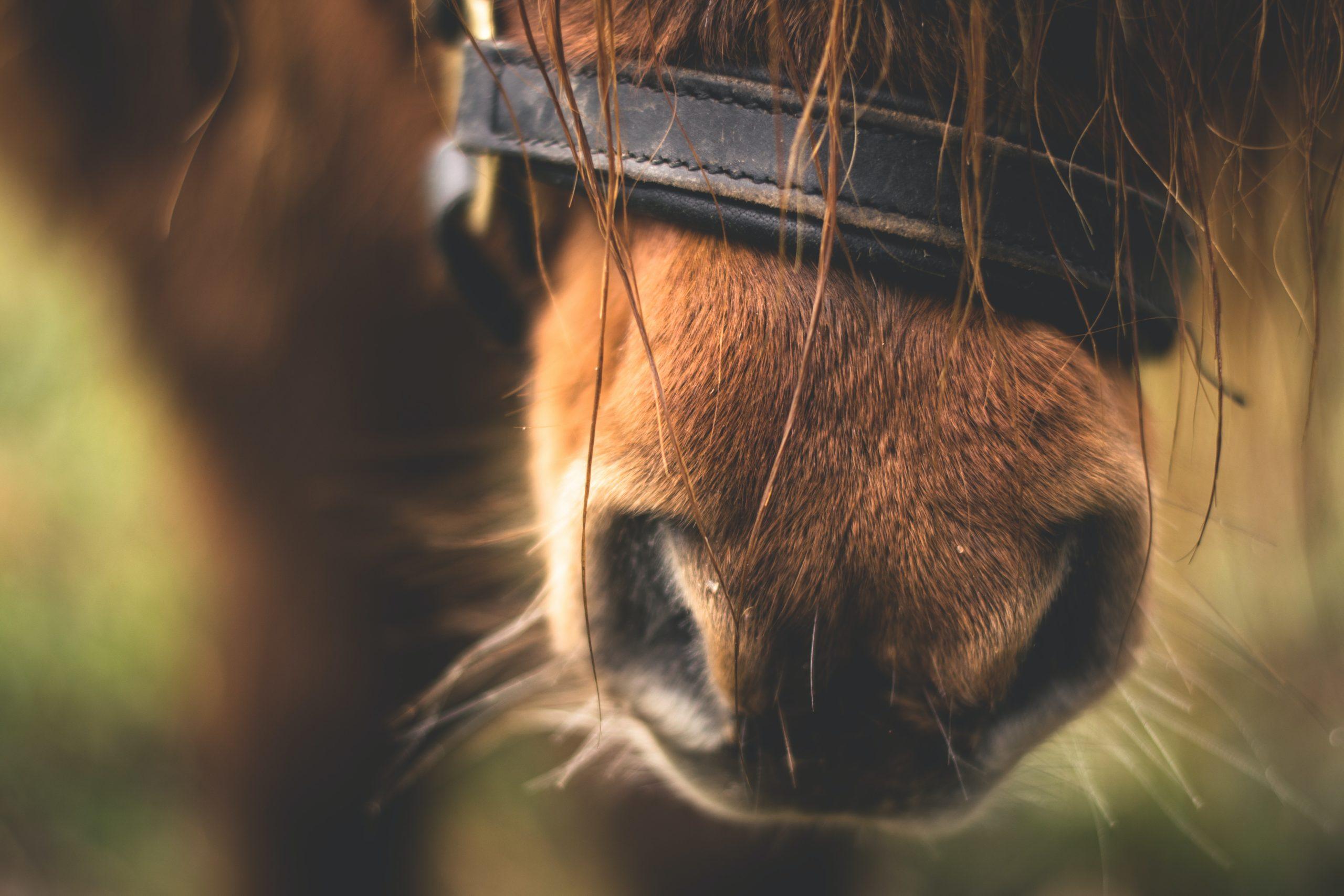 Horse Care Apprentice Abergwaun Stud, Haverfordwest